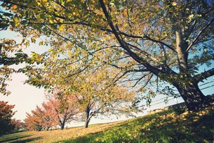 荒川桜堤の秋 FYI00226182