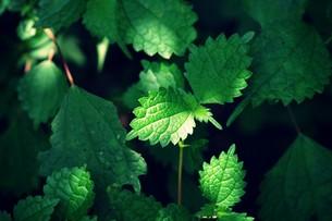 新緑と木漏れ日 FYI00226193