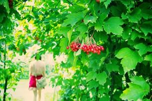 赤い実とグリーン FYI00226199