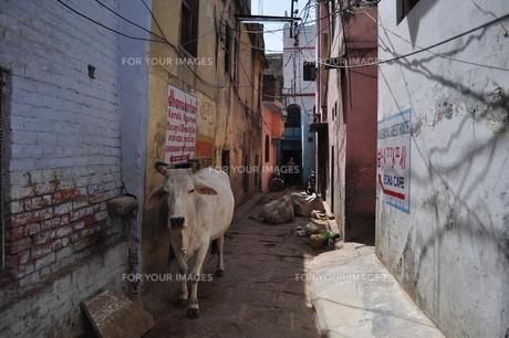 インドの路地裏 FYI00231777