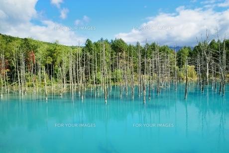 青い池 FYI00232926