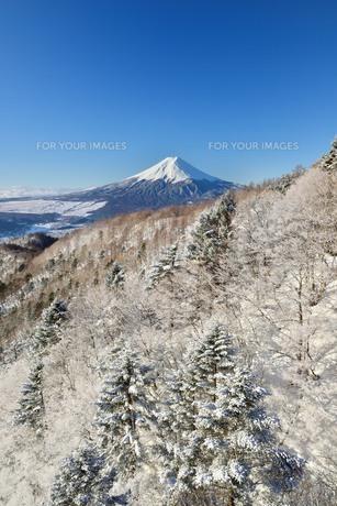三ツ峠より望む富士山 FYI00232952