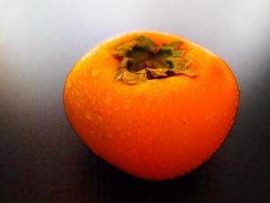 柿の実 FYI00234065
