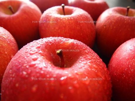 りんご FYI00234069