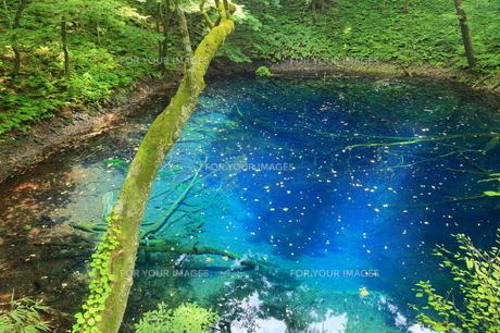 白神山地 十二湖の青池 FYI00240729