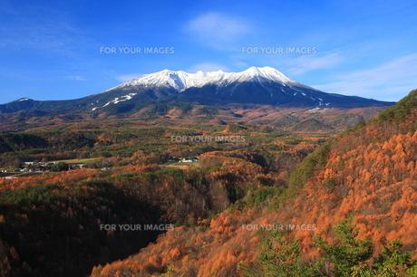 カラマツ映える御嶽山 FYI00240836
