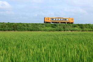 田園を走る津軽鉄道 FYI00240850