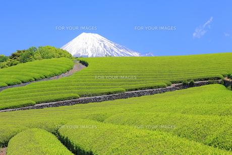 茶畑と富士山 FYI00240932