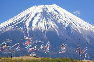 鯉のぼりと富士山 FYI00240941