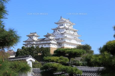 リニューアルした姫路城 FYI00241107