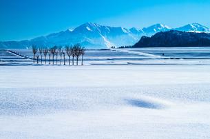 雪原のハサ木と越後三山 FYI00245772