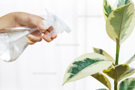 観葉植物 FYI00248295