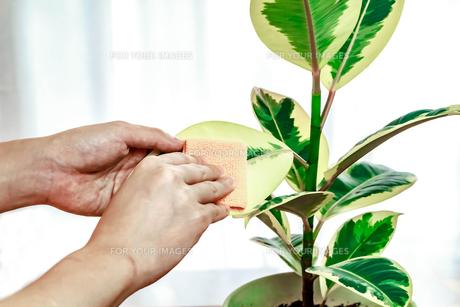 観葉植物 FYI00248303