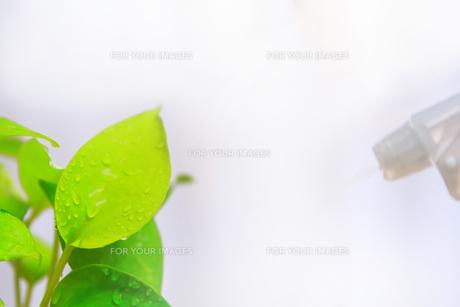 観葉植物 FYI00248345
