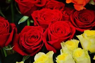 バラの花束 FYI00251292