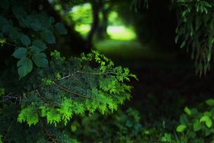 緑の中で FYI00251671