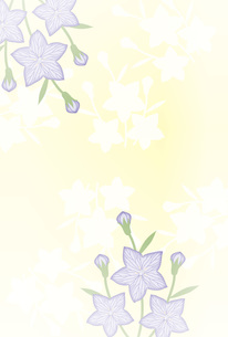 キキョウの花のポストカード喪中ハガキ FYI00252985