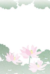蓮の花のグリーティングカード喪中ハガキ FYI00252986
