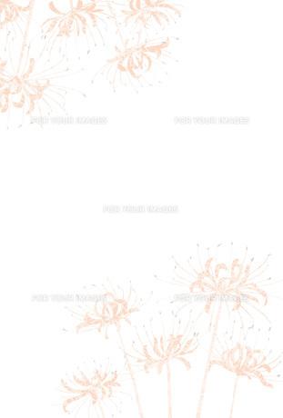 赤い彼岸花のポストカード喪中ハガキ FYI00252987
