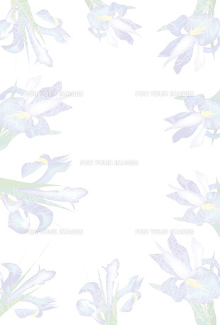 アイリスの花のポストカード喪中ハガキ FYI00252989