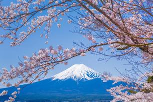 富士山と桜の風景 FYI00257125