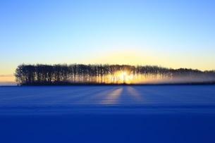 厳冬の朝 FYI00261403