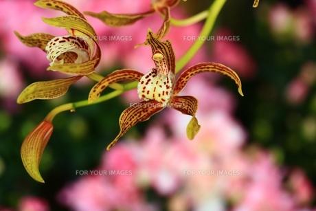 美しい花 FYI00261410