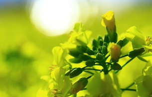 春の輝き FYI00261429