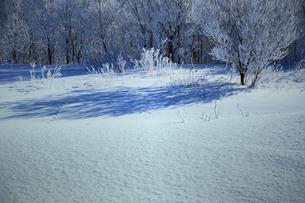 冬の川付近の樹氷 FYI00261433