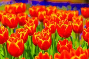 春の朱 FYI00261454