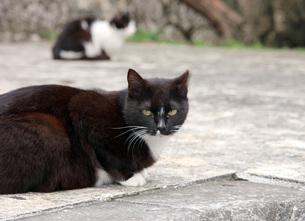 白黒の猫 FYI00261602