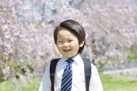 桜と新学期の子供 FYI00264330
