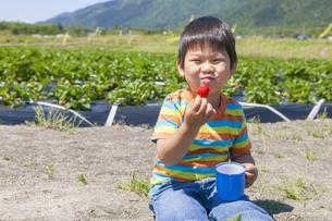 イチゴ狩りを楽しむ子供 FYI00264956