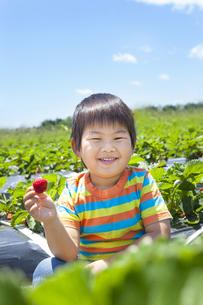 イチゴ狩りを楽しむ子供 FYI00264975
