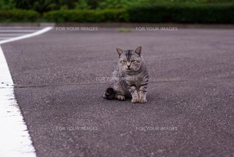 育ちのいい野良猫 FYI00265594