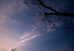 夕焼け空と電線と木 FYI00265605