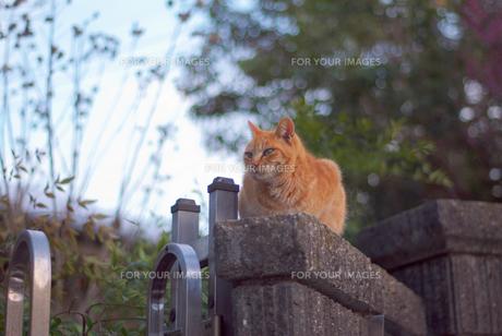 猫様 FYI00265612