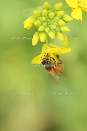 花とハチ FYI00266045