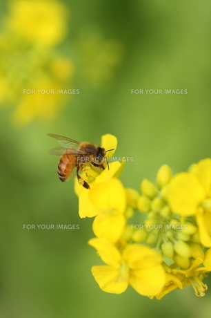 花とハチ FYI00266048