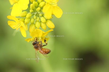 花とハチ FYI00266072