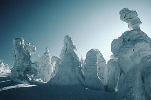 樹氷 FYI00266493