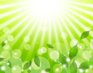 エコロジー FYI00276891