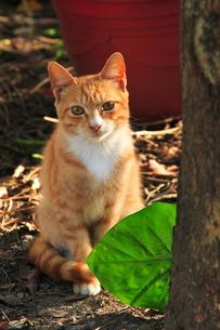 猫 FYI00283653