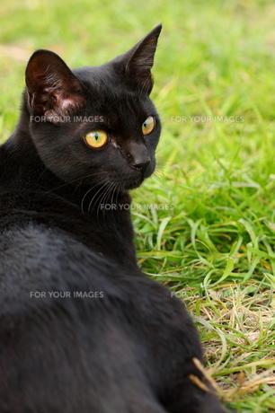 猫 FYI00283665