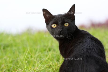 猫 FYI00283671