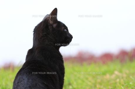 猫 FYI00283672