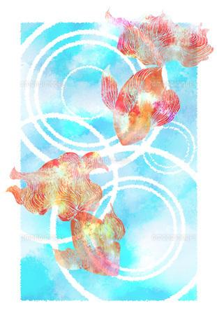 金魚 FYI00283765
