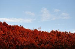 紅葉した山 FYI00289823