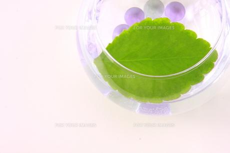 ガラスの花器に入ったビー玉とマザーリーフ FYI00290124