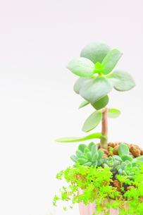多肉植物の寄せ植え FYI00290140